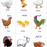 فلش کارت آموزش حیوانات مزرعه