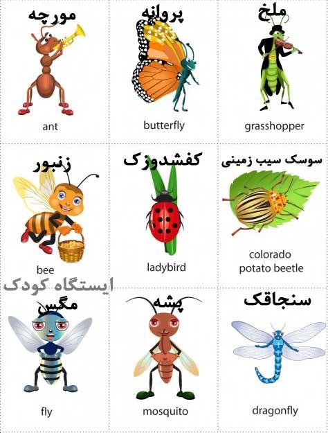 آشنایی با حشرات