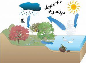 water-cycle03-forkids-300x222 آموزش چرخه آب به کودکان همراه با شعر کودکانه و تصاویر