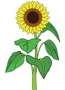 Sunflower-clipart-01-216x300 قصه صوتی گل و پرنده و خورشید