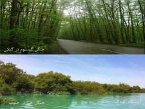 forest2-300x225 آشنایی با جنگل های ایران آموزشی برای کودکان