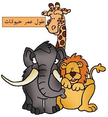 طول عمر حیوانات - عکس کارتونی حیوانات