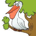 عکس کارتونی پلیکان - مرغ ماهیخوار