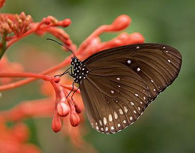 پروانه روی شاخه گل