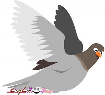 کبوتر ناز من