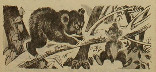 bear81 دانلود pdf کودکانه آرزوهای خرس