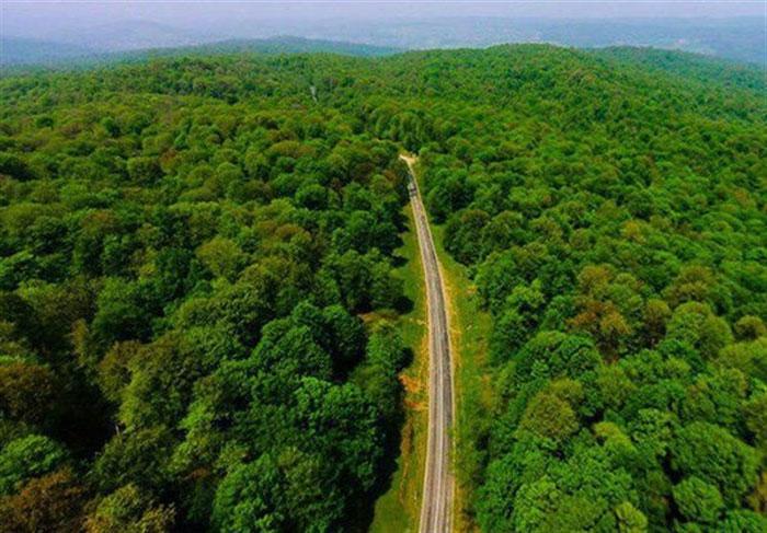 Hyrcanian_forests آشنایی با جنگل های هیرکانی ، یکی از پیرترین ایرانی ها
