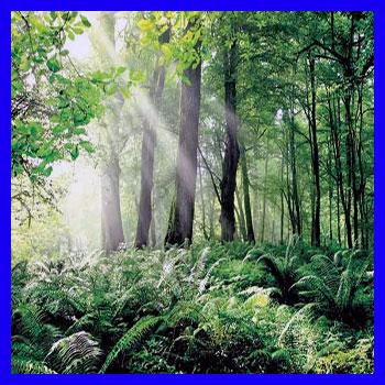 آشنایی با جنگل های هیرکانی