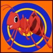 مورچه بی دقت